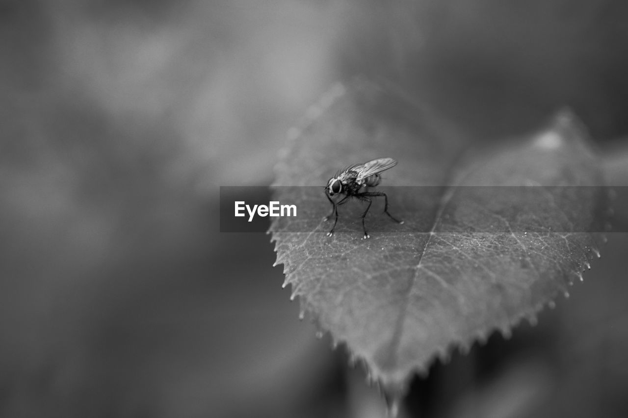 animals in the wild, invertebrate, leaf, plant part, one animal, animal wildlife, animal, close-up, animal themes, insect, selective focus, nature, day, no people, focus on foreground, beauty in nature, plant, animal wing, outdoors, fly, leaves