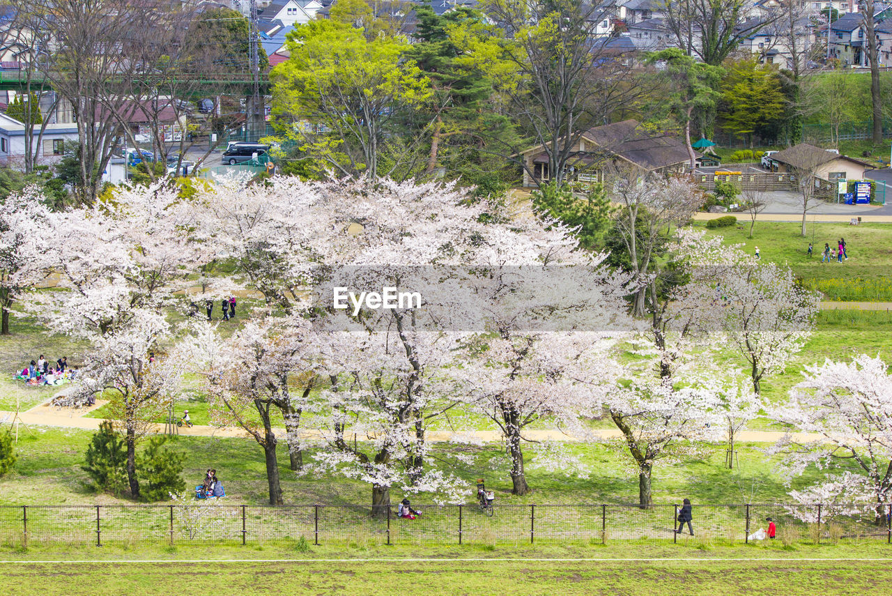 plant, tree, day, incidental people, nature, growth, flower, park, beauty in nature, architecture, flowering plant, blossom, outdoors, park - man made space, springtime, grass, built structure, building exterior, real people, group of people, cherry blossom, cherry tree