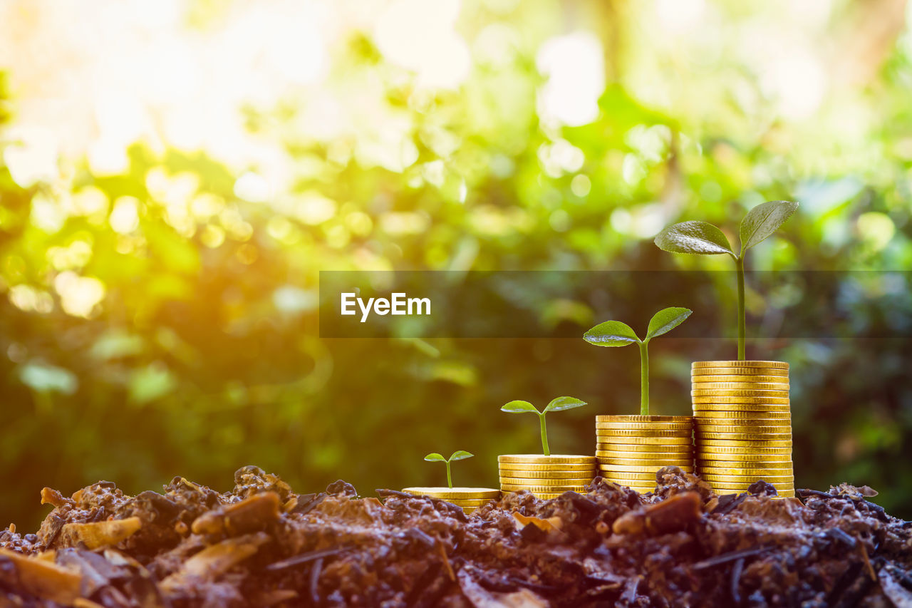 plant, growth, leaf, selective focus, plant part, nature, no people, green color, day, focus on foreground, close-up, freshness, beginnings, tree, finance, outdoors, sapling, wealth, seedling, field