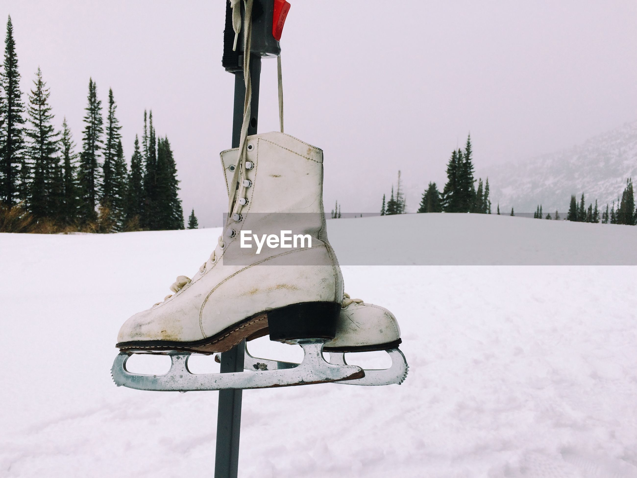 Close-up of ice skate hanging on pole at snow covered field
