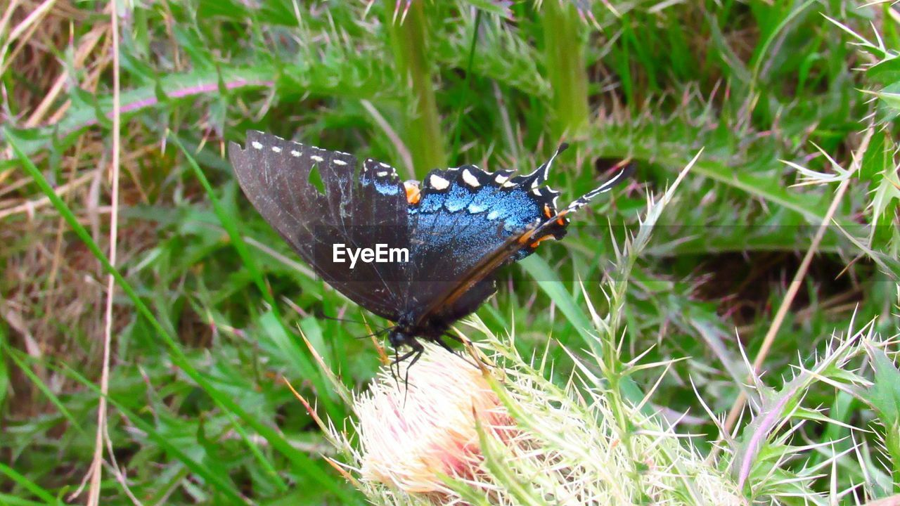 plant, grass, nature, animal, animal themes, day, animal wildlife, invertebrate, growth, no people, one animal, land, close-up, animals in the wild, insect, green color, high angle view, blue, animal wing, butterfly - insect, outdoors, butterfly, small