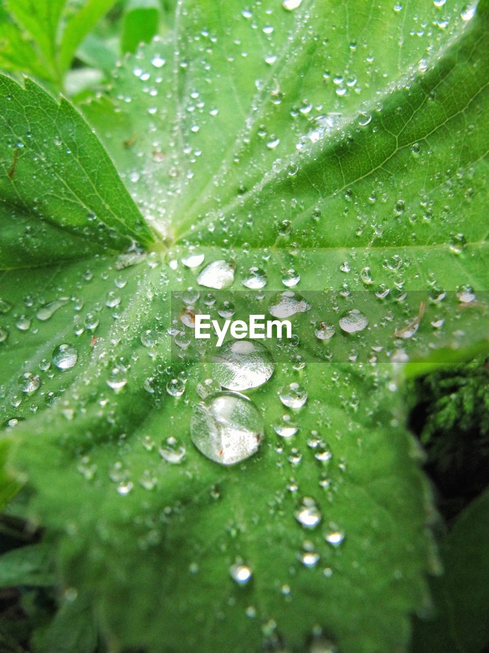 drop, green color, water, leaf, wet, nature, close-up, no people, raindrop, freshness, backgrounds, full frame, growth, day, outdoors, fragility, beauty in nature