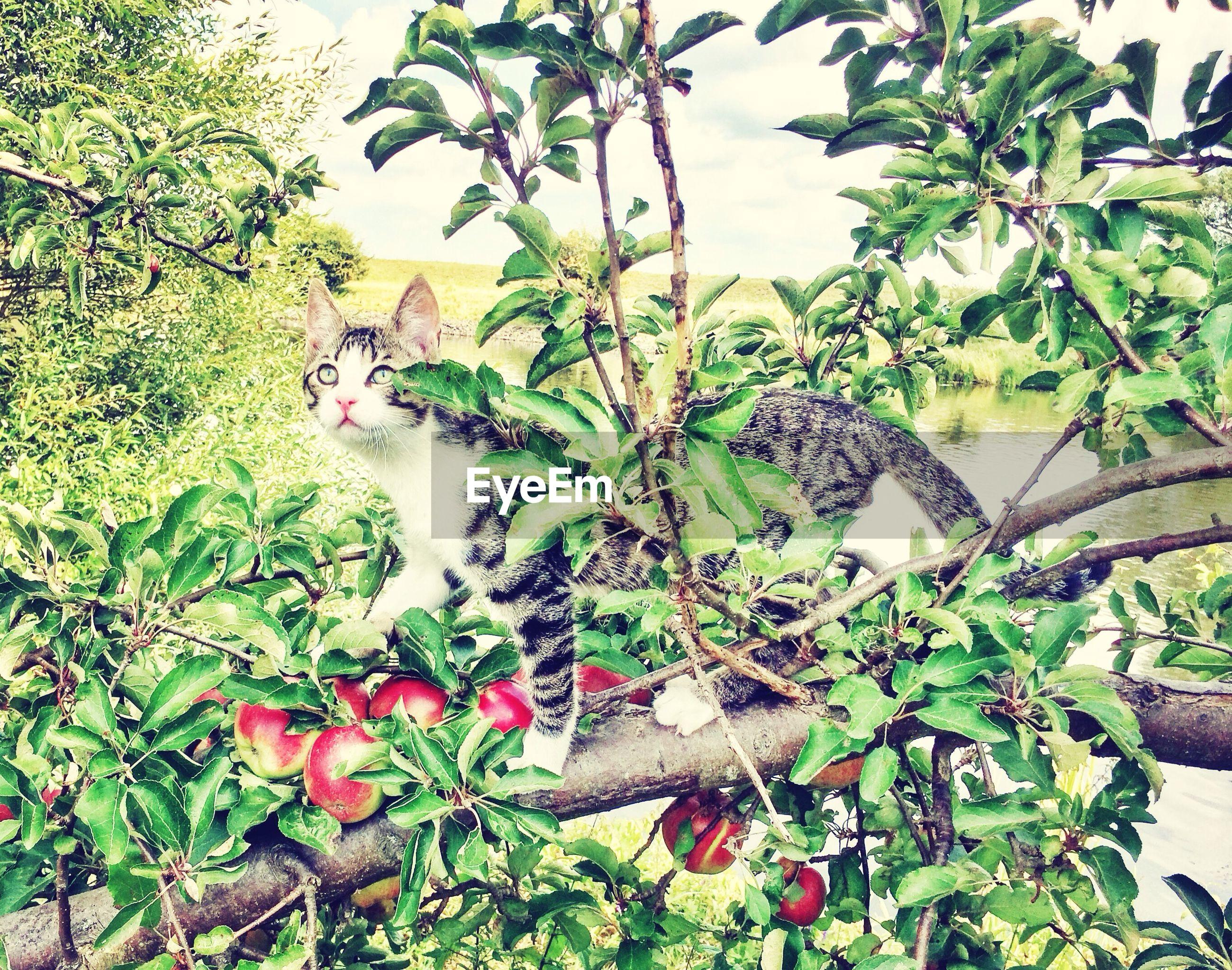 Cat on apple tree