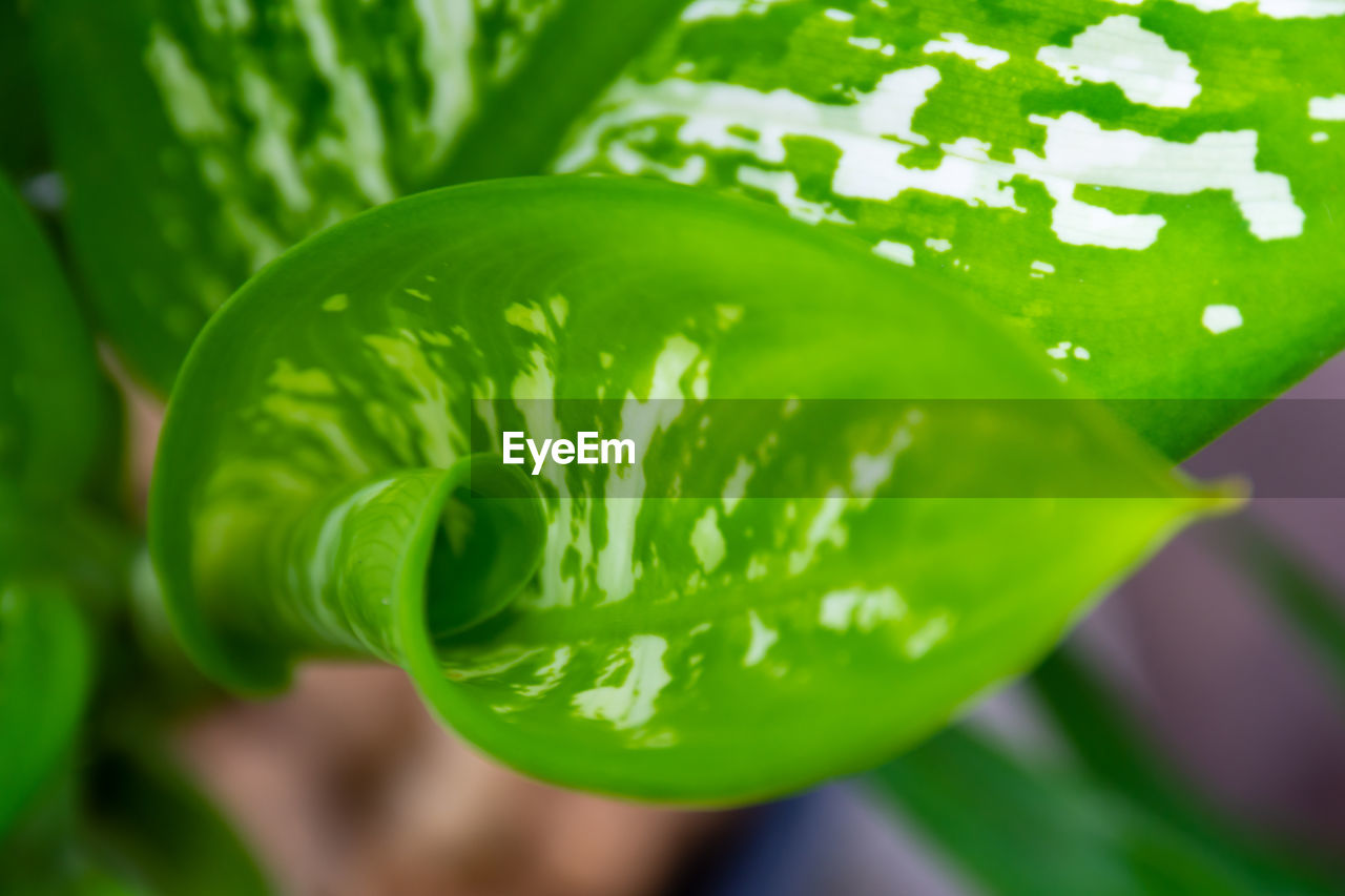 green color, close-up, freshness, growth, plant, beauty in nature, no people, leaf, focus on foreground, plant part, food and drink, nature, food, day, water, selective focus, wellbeing, outdoors, healthy eating