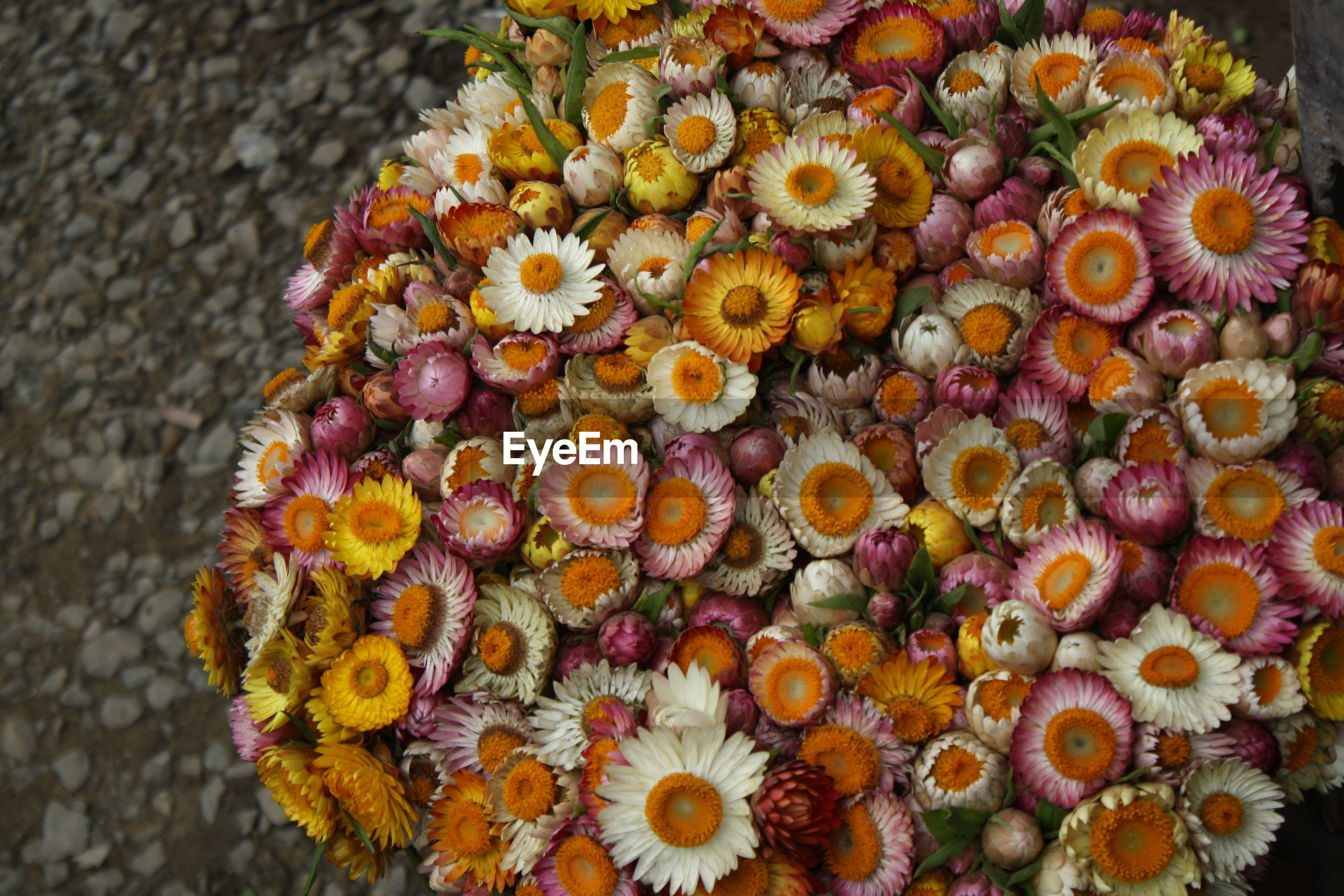 High angle view of flowers