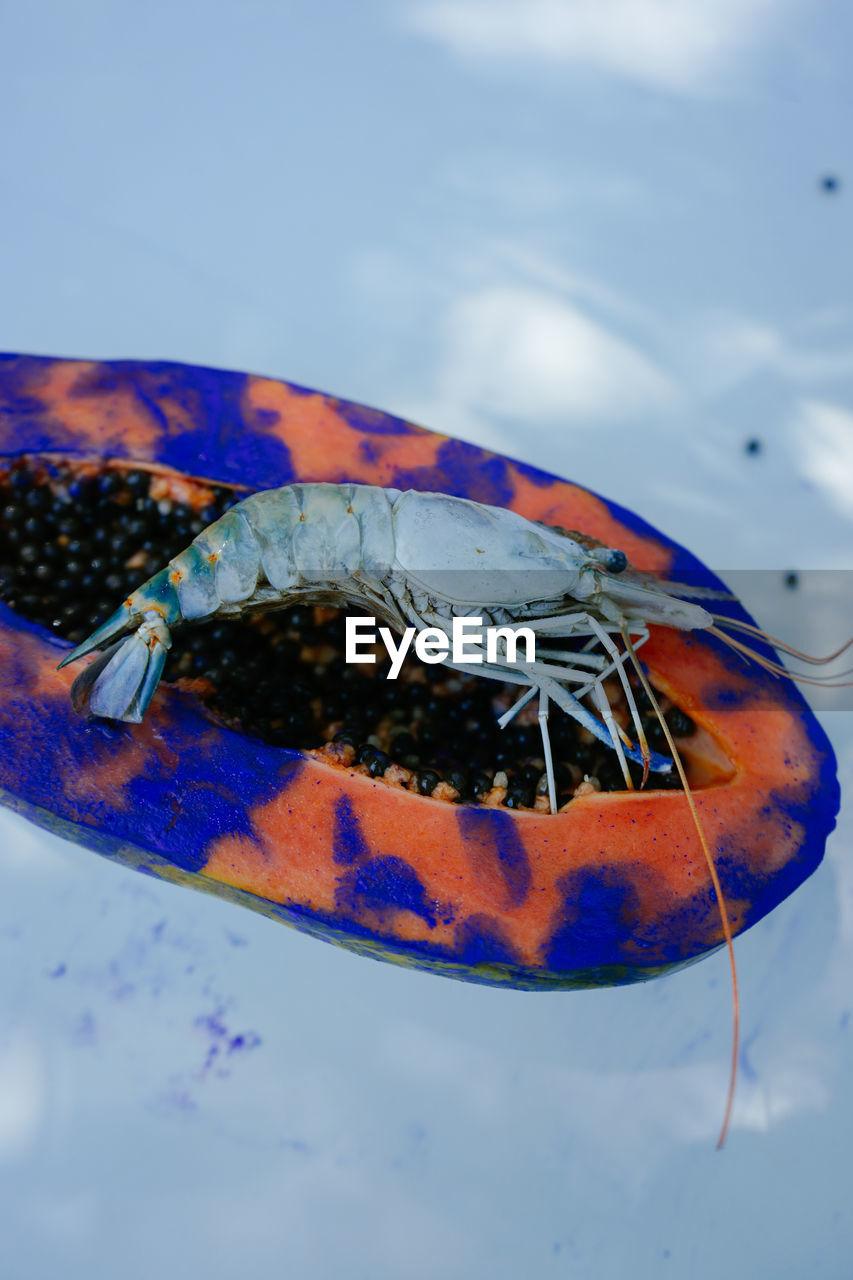 CLOSE-UP OF FISH TANK