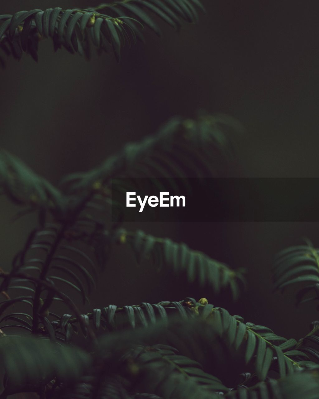 growth, plant, leaf, plant part, green color, close-up, no people, beauty in nature, selective focus, nature, fern, tree, tranquility, night, outdoors, natural pattern, freshness, vulnerability, fragility, botany