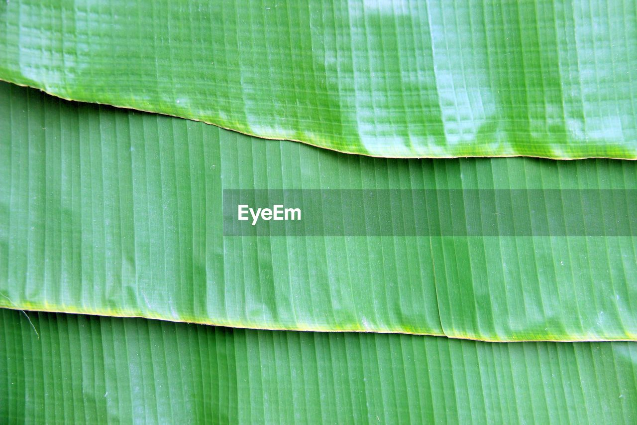 green color, backgrounds, full frame, leaf, plant part, no people, close-up, banana leaf, pattern, freshness, extreme close-up, textured, plant, nature, day, beauty in nature, natural pattern, outdoors, leaves, palm leaf