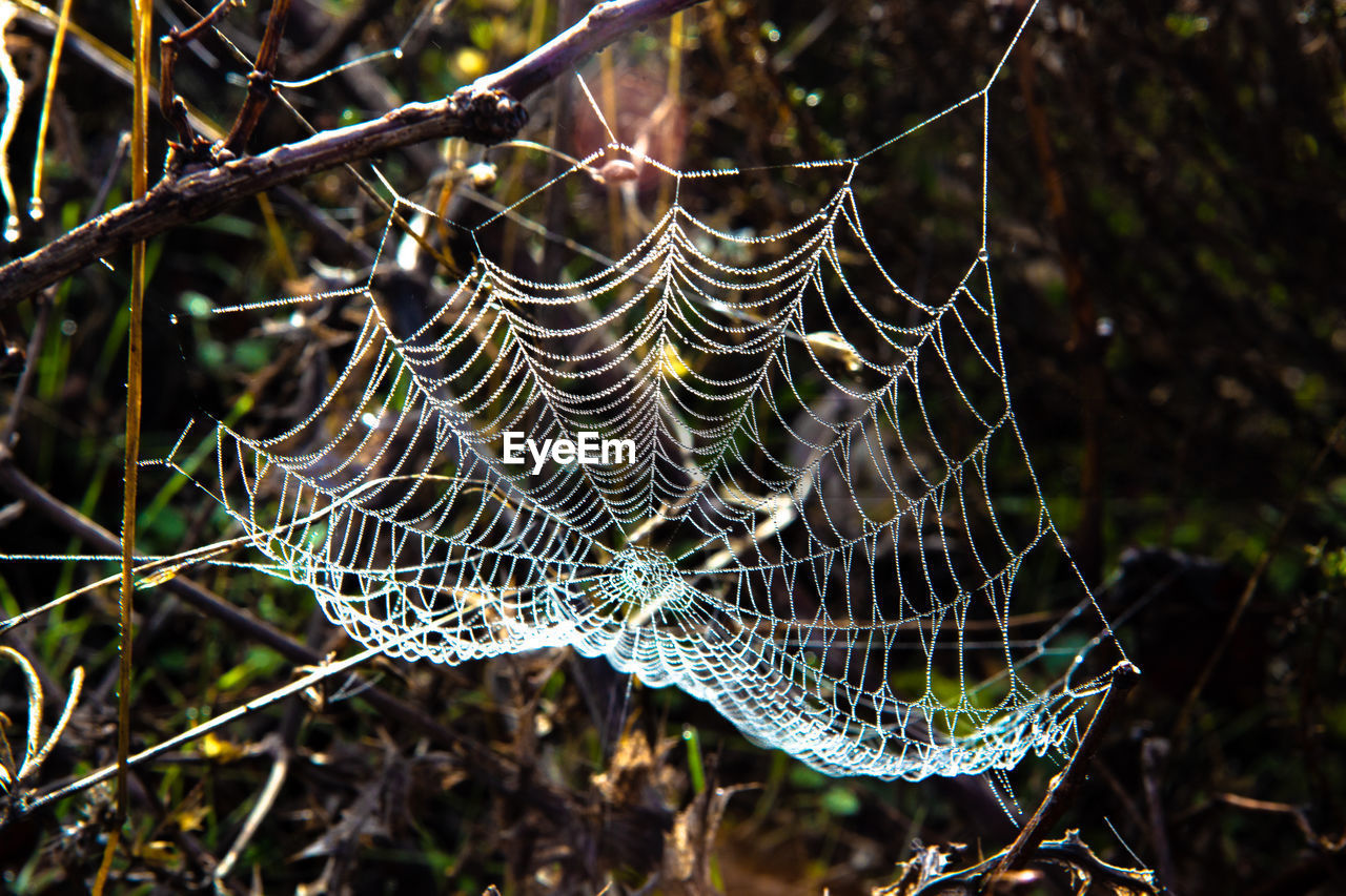 CLOSE-UP OF SPIDER WEB ON DEW