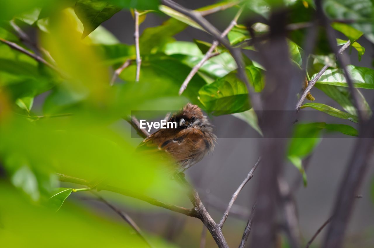 one animal, animals in the wild, animal themes, plant, nature, leaf, animal wildlife, growth, day, green color, no people, outdoors, close-up, bird, perching, sparrow, beauty in nature, freshness