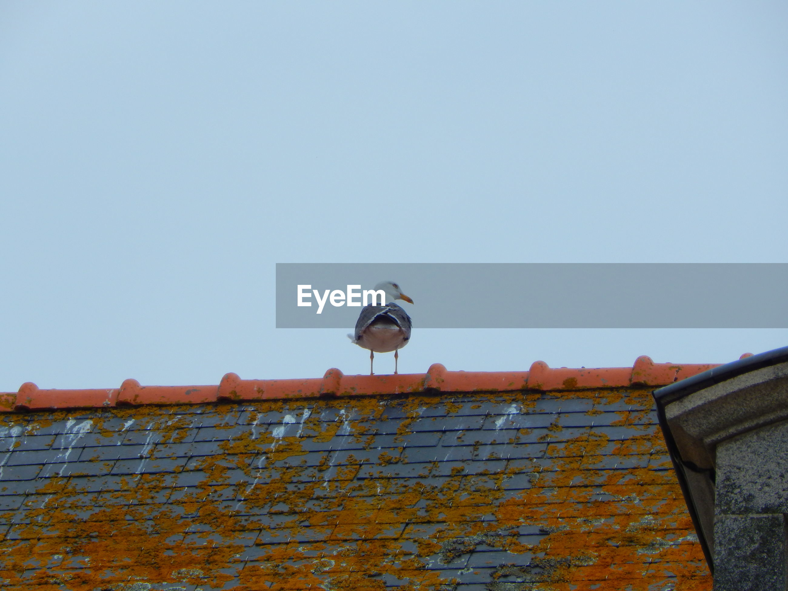 Low angle view of bird on roof