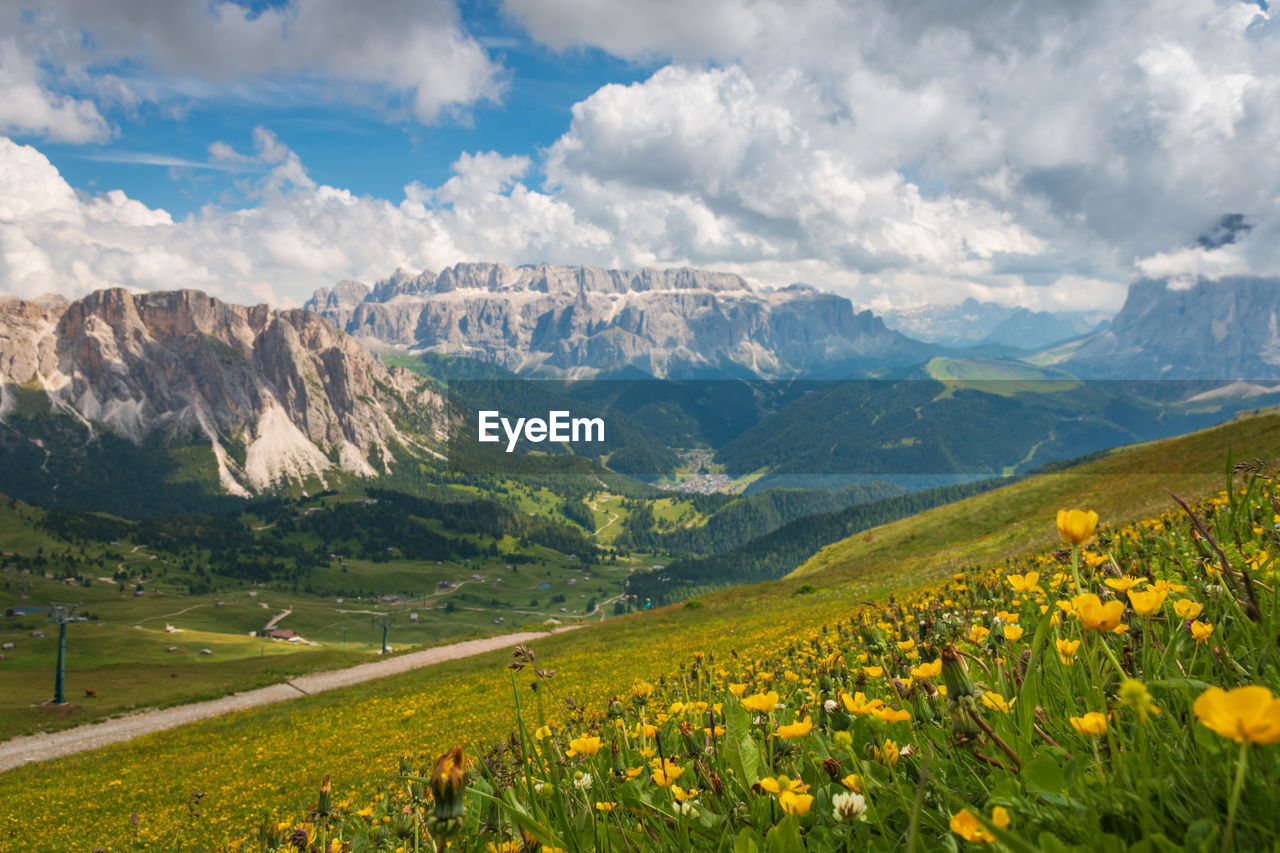 Scenic view of sella group mountains with flowers in the foreground against cloudy sky