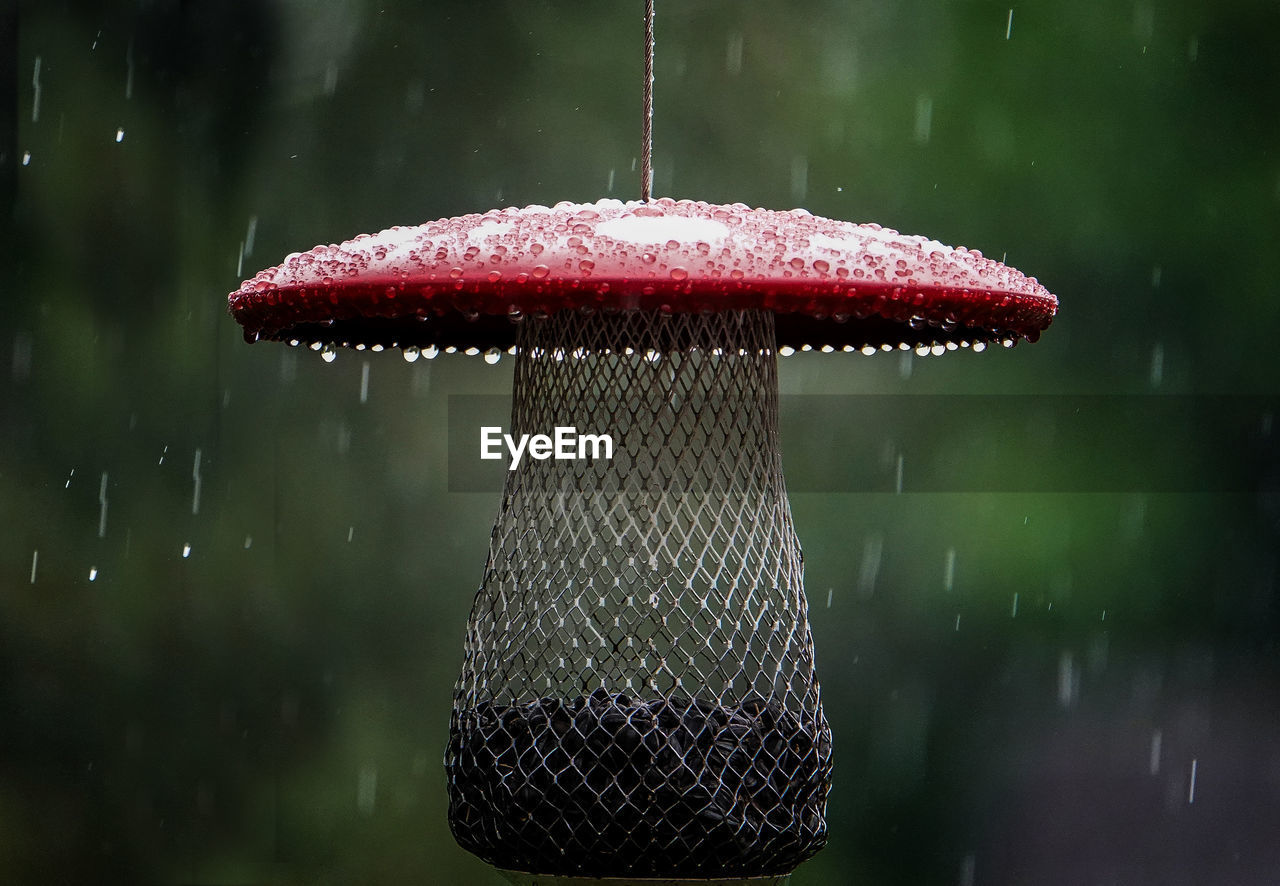 close-up, mushroom, focus on foreground, water, fungus, nature, no people, day, outdoors, vegetable, wet, drop, plant, food, tree, growth, freshness, rain, toadstool, snowing, raindrop