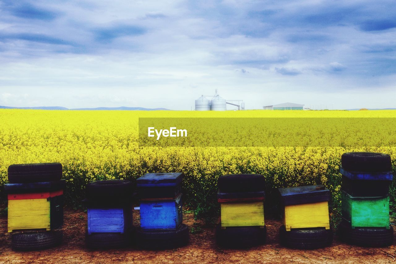 yellow, field, agriculture, sky, farm, landscape, rural scene, fuel and power generation, nature, no people, oilseed rape, day, outdoors, growth, beauty in nature, technology, wind power