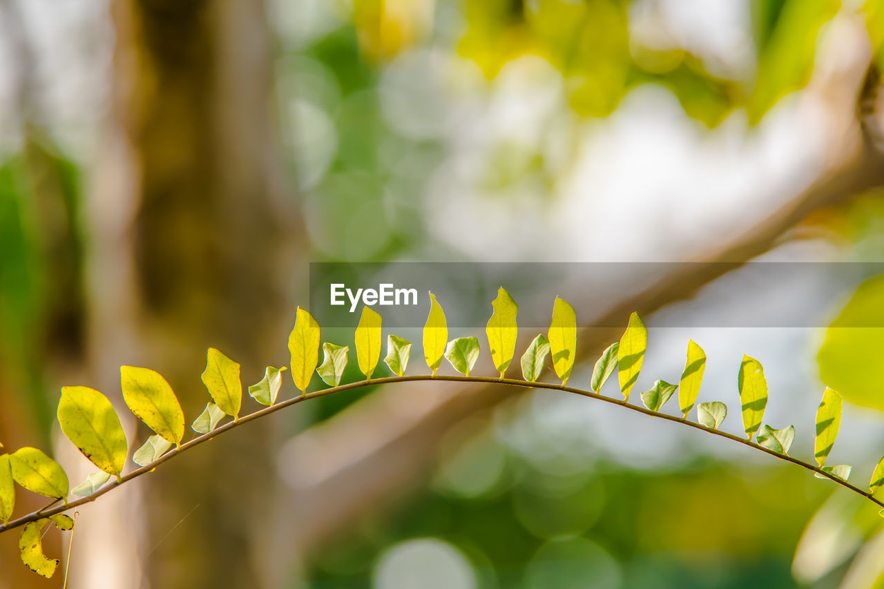 plant, close-up, focus on foreground, growth, no people, plant part, leaf, yellow, beauty in nature, nature, selective focus, day, outdoors, green color, tranquility, sunlight, freshness, leaves, vulnerability, fragility, bright