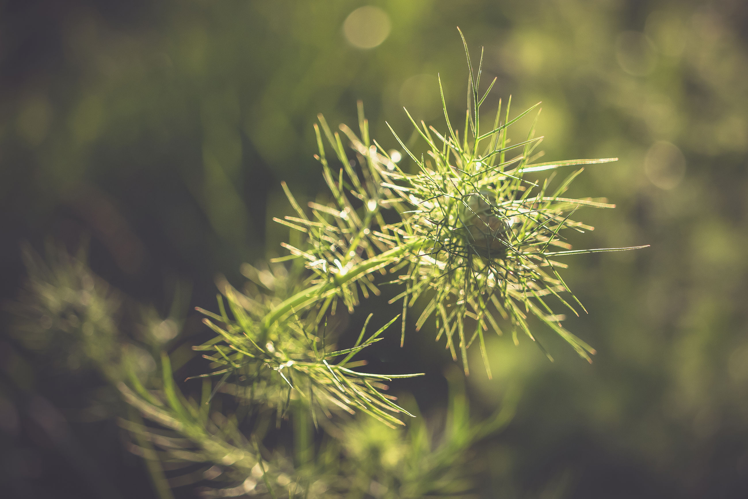 nature, plant, green, grass, branch, beauty in nature, macro photography, leaf, tree, flower, close-up, no people, focus on foreground, sunlight, growth, pinaceae, coniferous tree, outdoors, freshness, day, pine tree, flowering plant, environment, plant stem, land, tranquility, fragility, selective focus, plant part, thorns, spines, and prickles, social issues