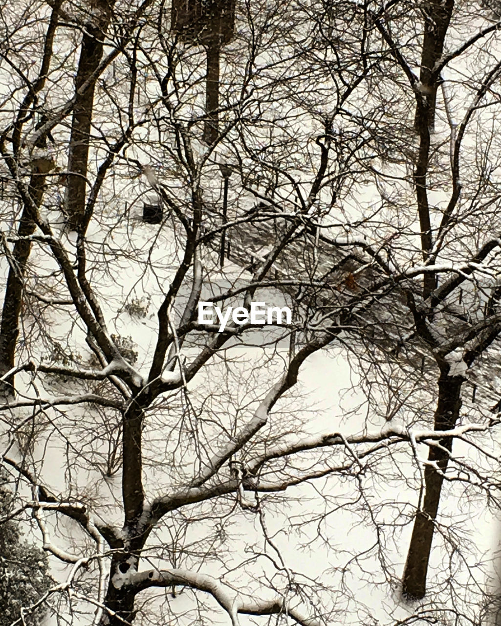 bare tree, branch, tree, low angle view, no people, outdoors, nature, day, winter, beauty in nature, bird, sky, perching, animal themes