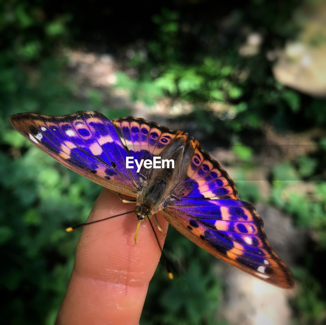 human body part, human hand, hand, one person, real people, holding, body part, finger, human finger, unrecognizable person, one animal, focus on foreground, animals in the wild, close-up, animal wildlife, lifestyles, day, animal wing, outdoors, butterfly - insect, purple