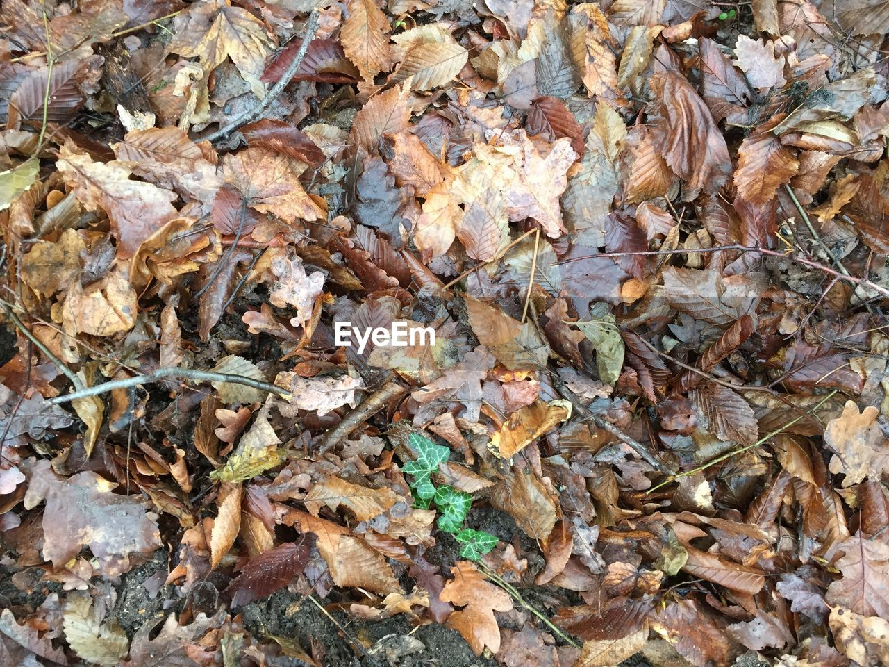 High angle view of dry leaves