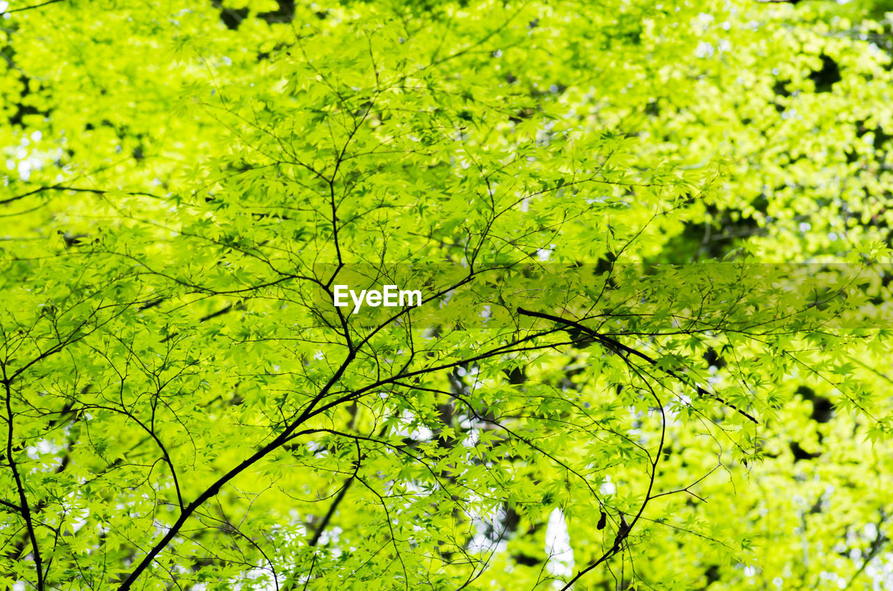green color, plant, nature, beauty in nature, no people, growth, water, tree, day, tranquility, outdoors, full frame, foliage, land, lush foliage, branch, environment, close-up, backgrounds, leaves