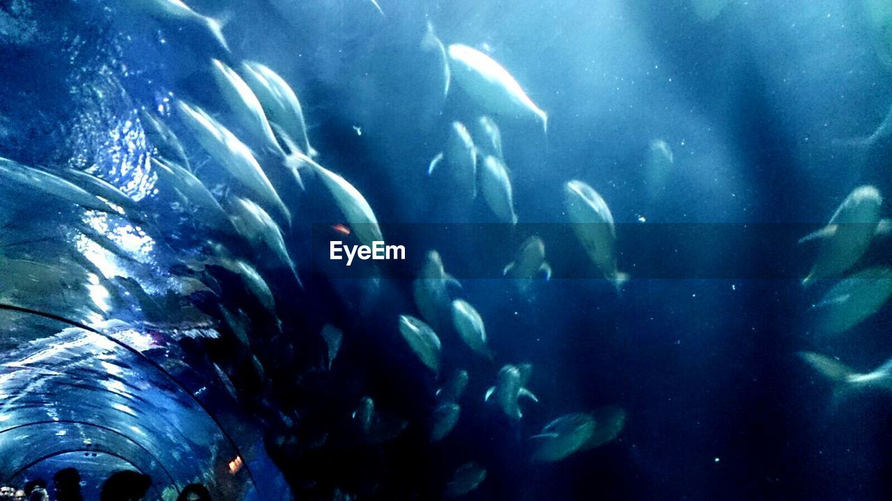 large group of animals, animal themes, animals in the wild, blue, water, fish, no people, sea life, swimming, nature, aquarium, beauty in nature, day, indoors, undersea, close-up