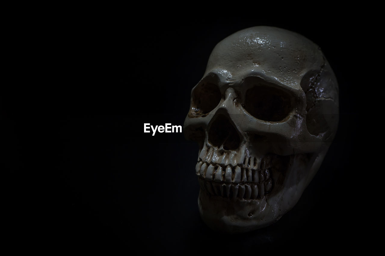 human skull, spooky, human skeleton, studio shot, indoors, close-up, black background