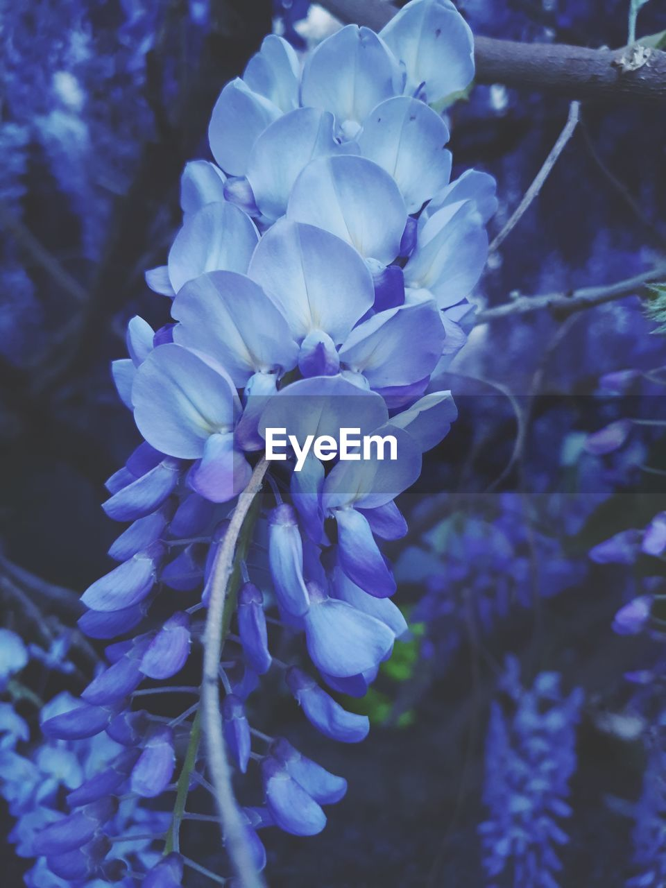 flowering plant, plant, flower, beauty in nature, fragility, vulnerability, freshness, petal, close-up, growth, purple, nature, inflorescence, focus on foreground, flower head, no people, botany, selective focus, outdoors, blossom, spring
