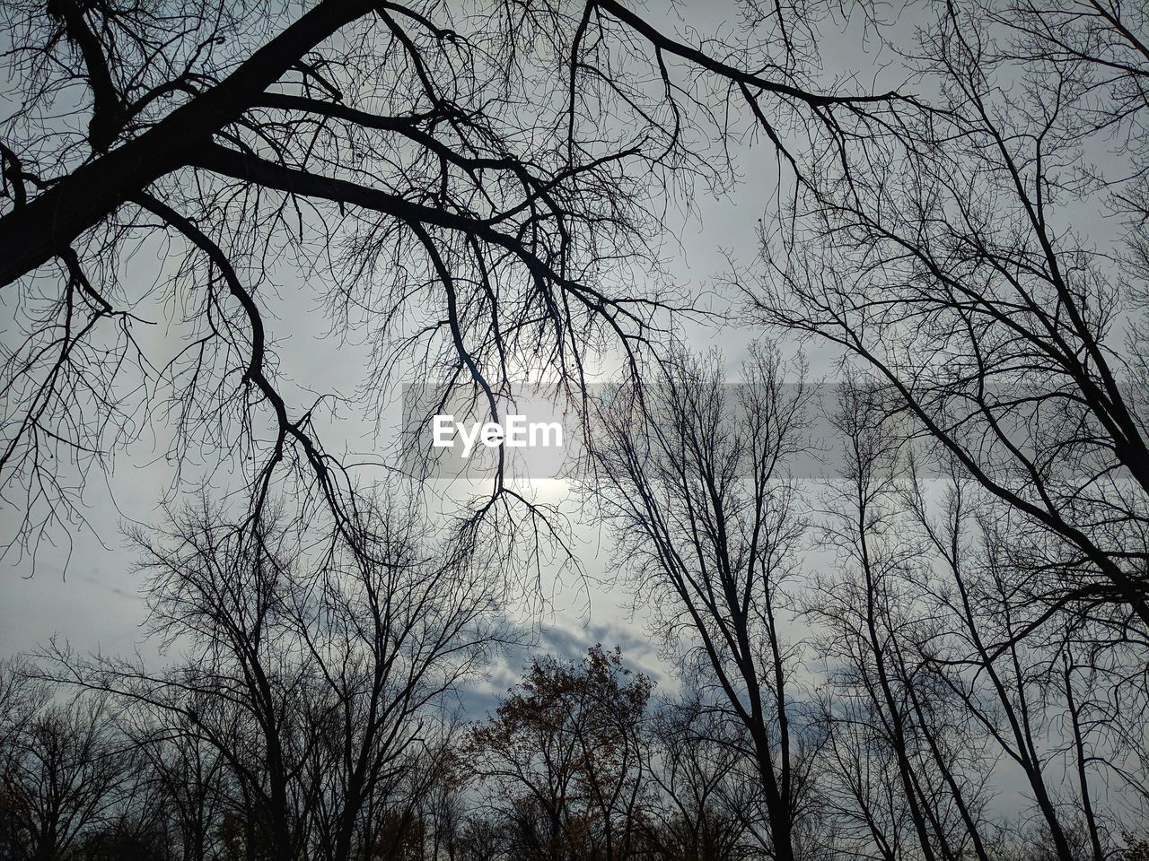 tree, bare tree, branch, sky, plant, silhouette, low angle view, no people, tranquility, nature, beauty in nature, scenics - nature, outdoors, tranquil scene, cloud - sky, dusk, day, backgrounds, spooky, tree canopy