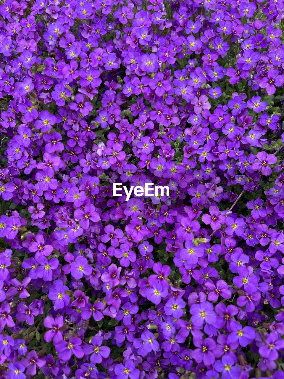 FULL FRAME OF PURPLE FLOWERING PLANTS