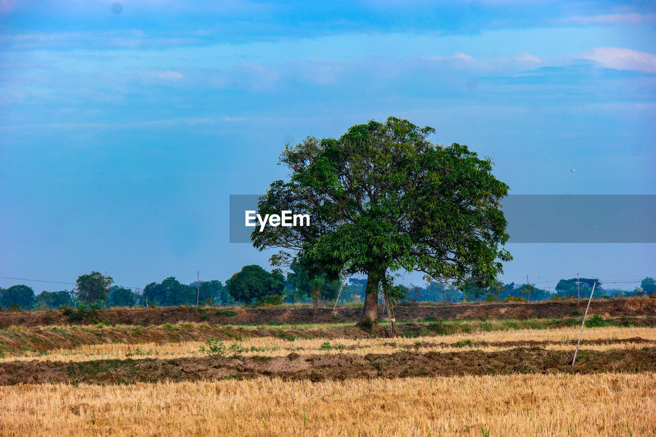sky, tree, plant, environment, landscape, field, land, nature, beauty in nature, tranquility, no people, tranquil scene, grass, scenics - nature, growth, blue, cloud - sky, outdoors, day, freedom