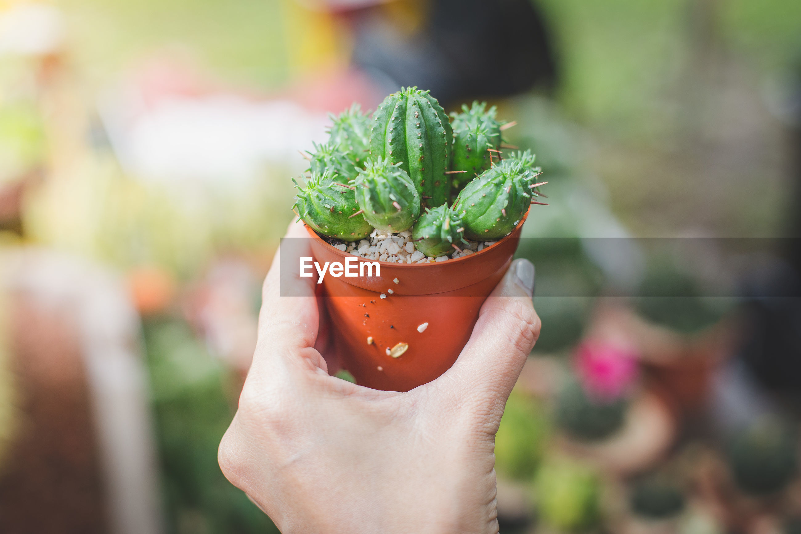 HAND HOLDING POTTED PLANT