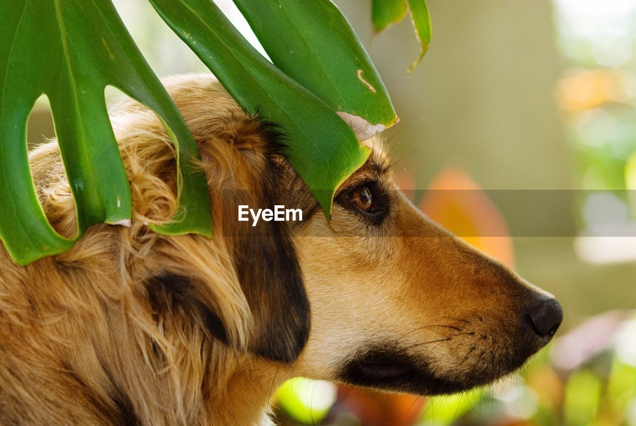 one animal, animal themes, animal, mammal, vertebrate, dog, close-up, canine, domestic, focus on foreground, pets, plant part, leaf, domestic animals, looking, no people, plant, looking away, animal body part, nature, outdoors, animal head, profile view