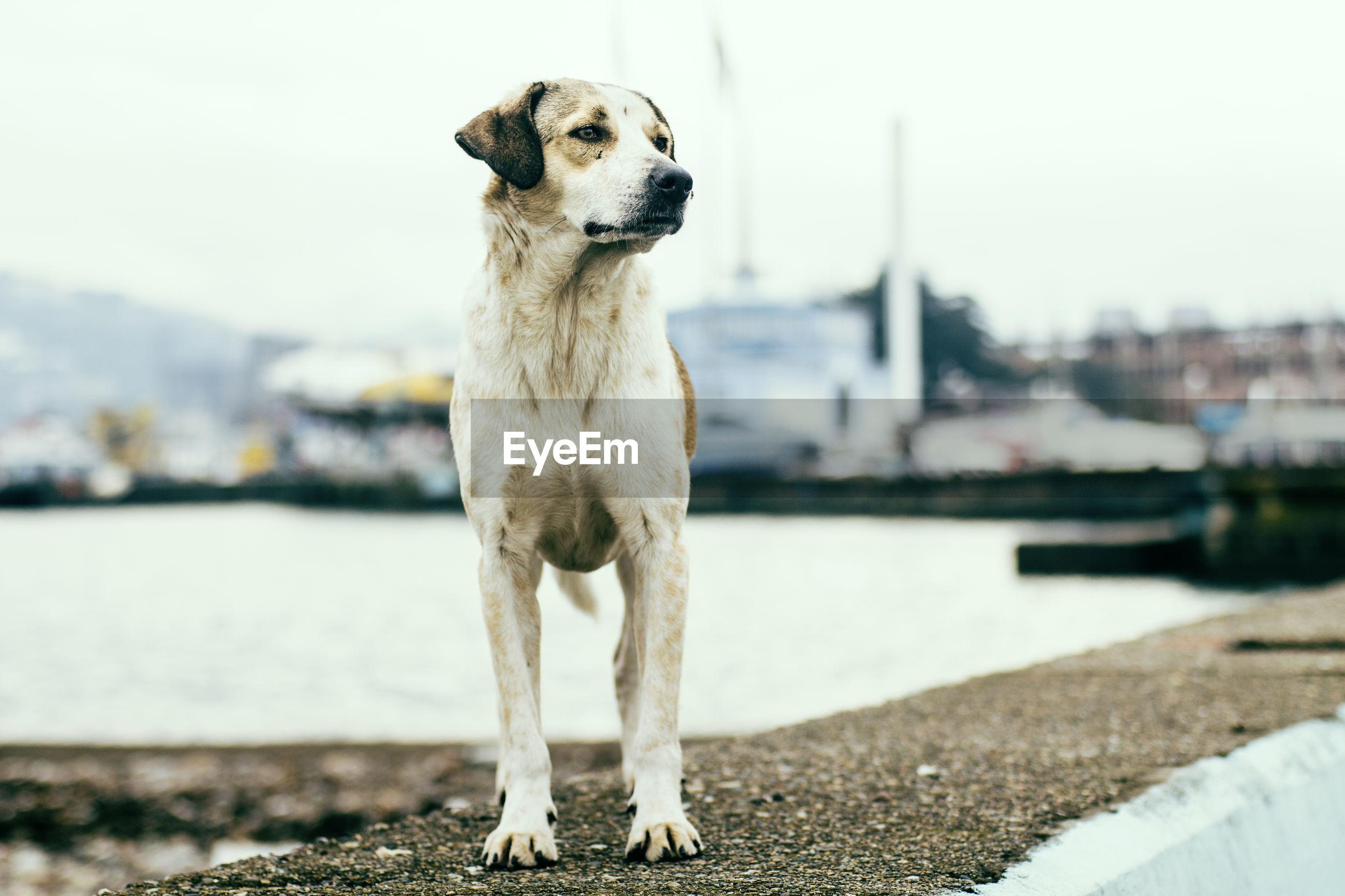 Dog looking away lakeside