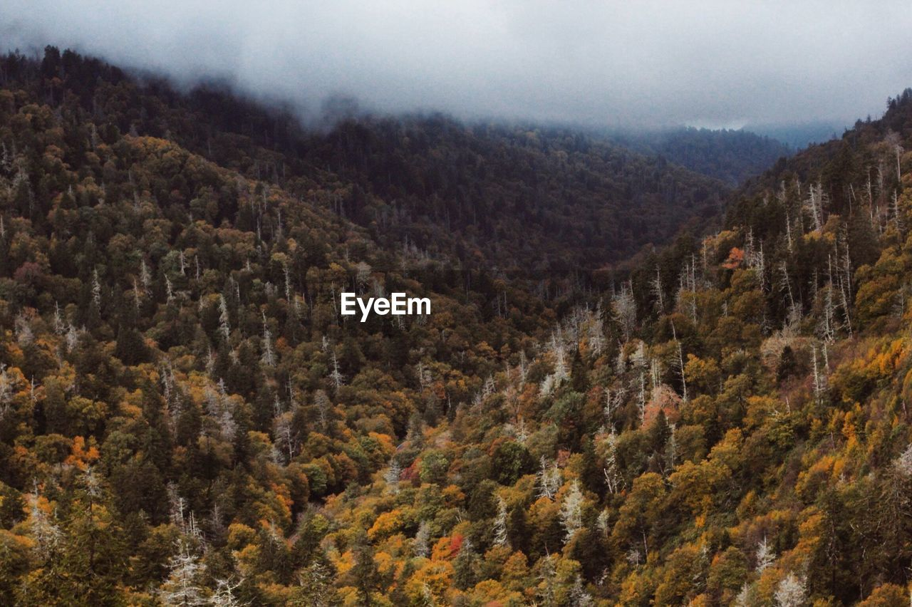 mountain, nature, tree, tranquility, beauty in nature, tranquil scene, autumn, scenics, day, no people, landscape, outdoors, mountain range, forest, sky