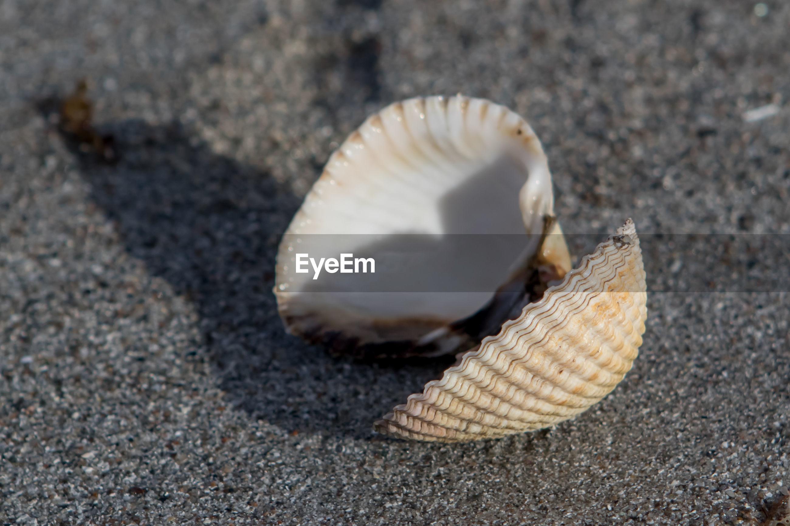 CLOSE-UP VIEW OF SEASHELL ON SEASHELLS
