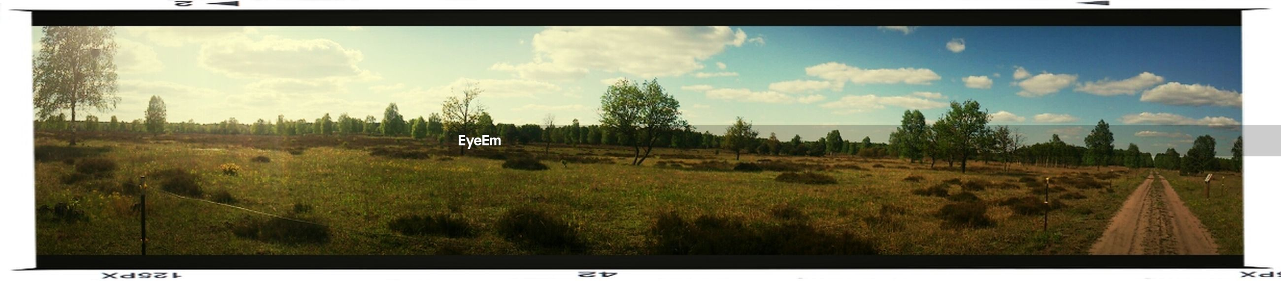 transfer print, auto post production filter, sky, landscape, tranquil scene, tree, tranquility, field, grass, cloud - sky, cloud, scenics, nature, panoramic, beauty in nature, growth, frame, blue, outdoors, plant