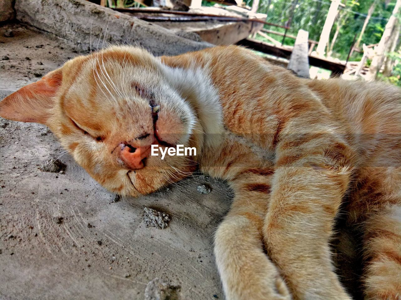 cat, feline, animal themes, relaxation, mammal, animal, domestic cat, one animal, pets, domestic, vertebrate, domestic animals, eyes closed, lying down, sleeping, no people, resting, close-up, day, whisker, ginger cat, animal head, mouth open