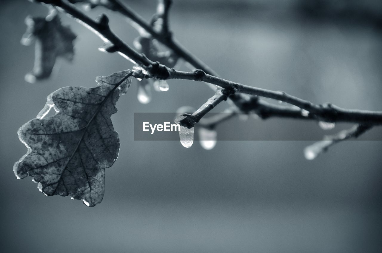 cold temperature, winter, drop, nature, weather, frozen, focus on foreground, close-up, twig, ice, outdoors, water, beauty in nature, leaf, frost, day, snow, wet, no people, icicle, branch, fragility, plant, tree, freshness