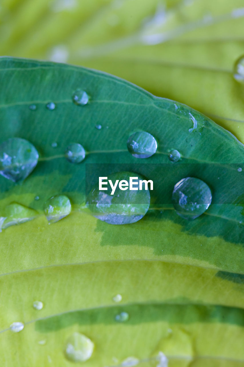 green color, drop, water, freshness, close-up, wet, leaf, nature, no people, growth, purity, backgrounds, beauty in nature, fragility, raindrop, healthy eating, food, plant, day, outdoors, flower head