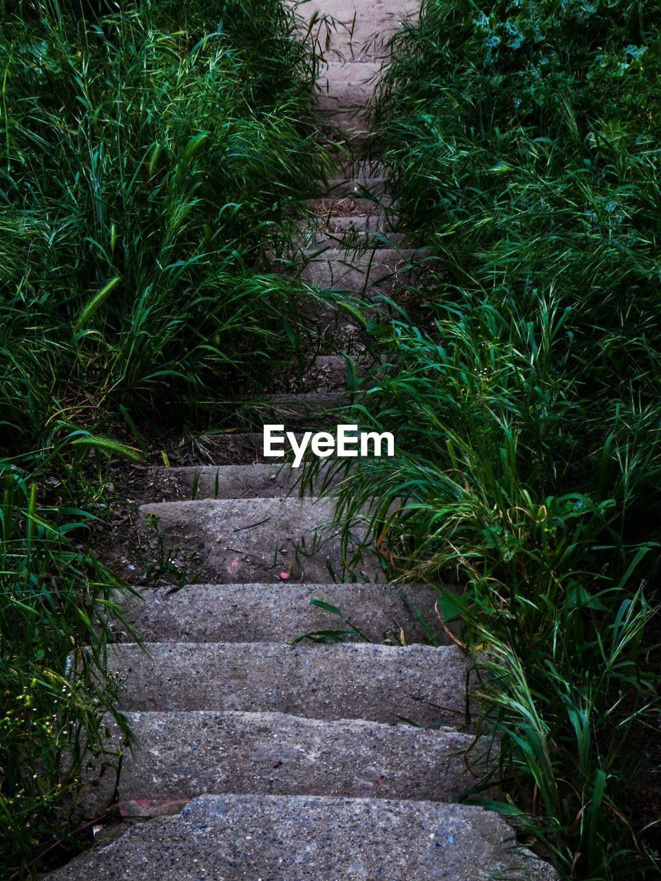 steps, steps and staircases, plant, nature, outdoors, the way forward, growth, grass, day, no people, beauty in nature, tree