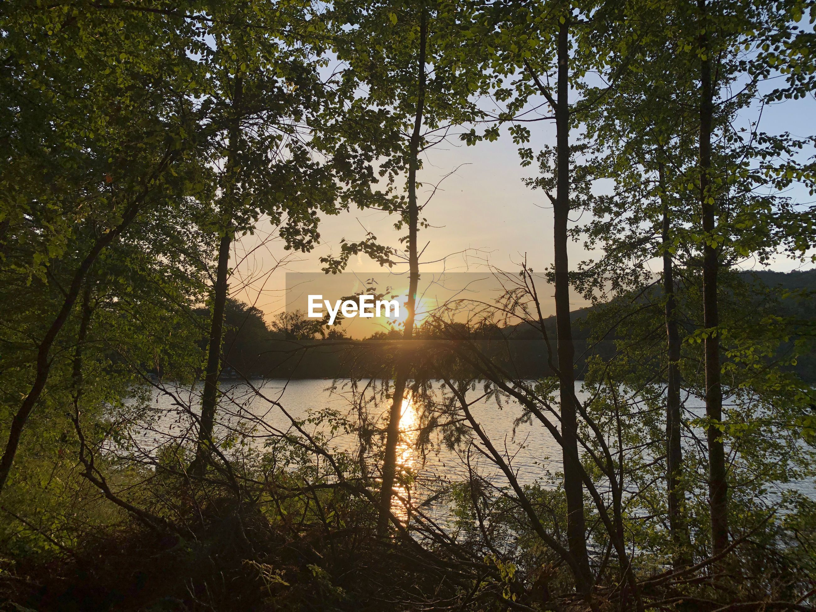 SCENIC VIEW OF LAKE IN FOREST DURING SUNSET
