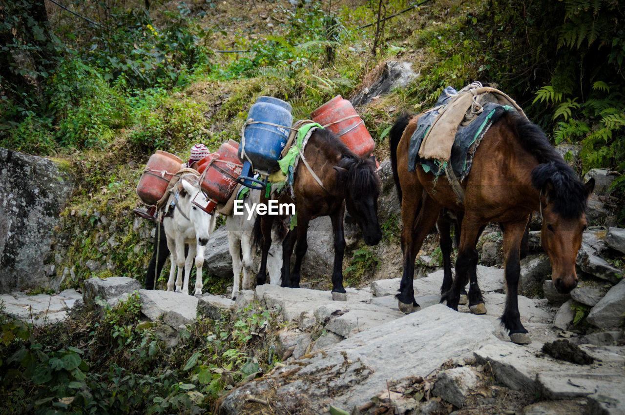 Horses On Rocky Landscape