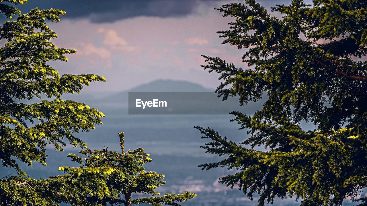 Scenic View Of Tree And Mountains Against Sky