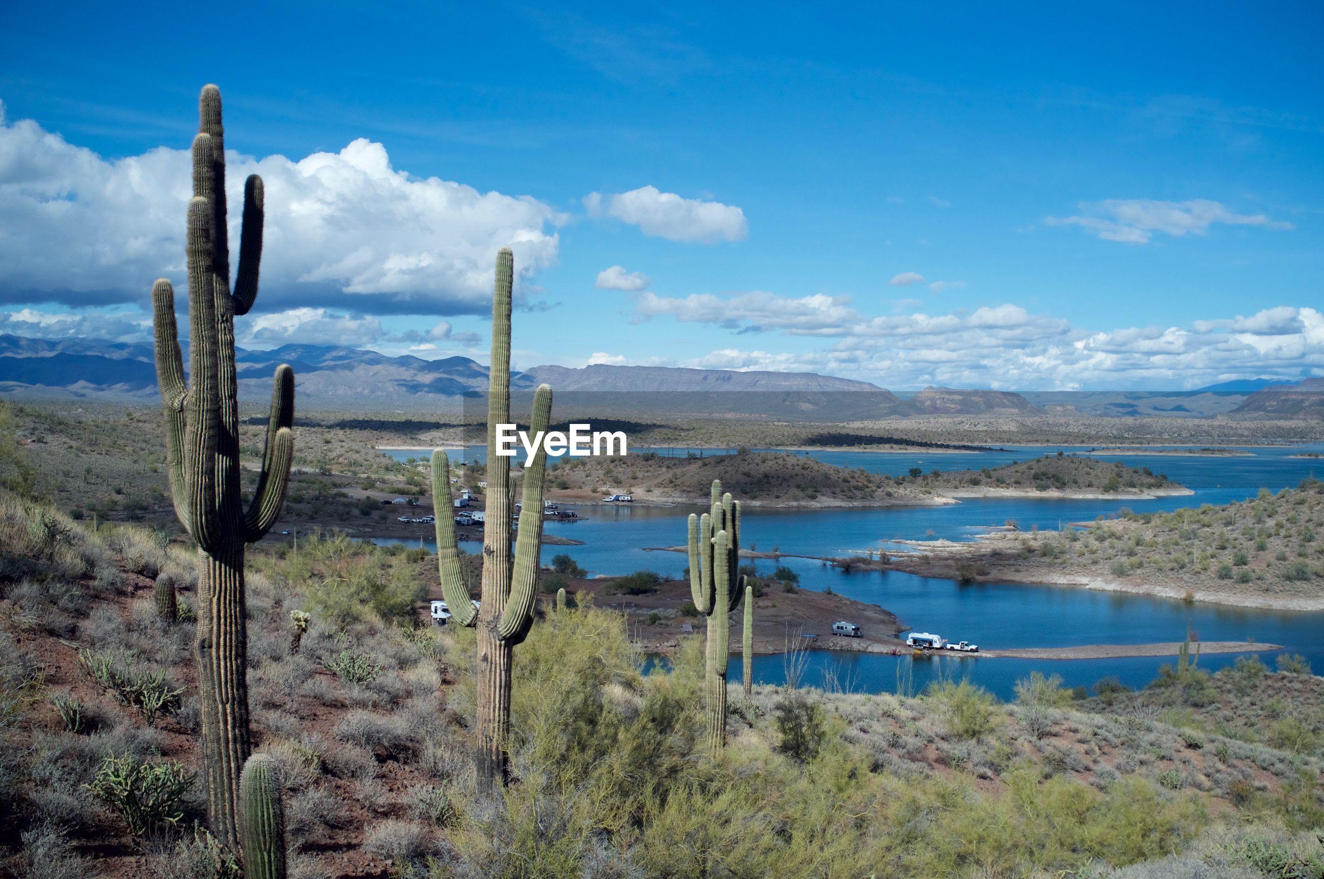 Saguaro cactuses on field against blue sky