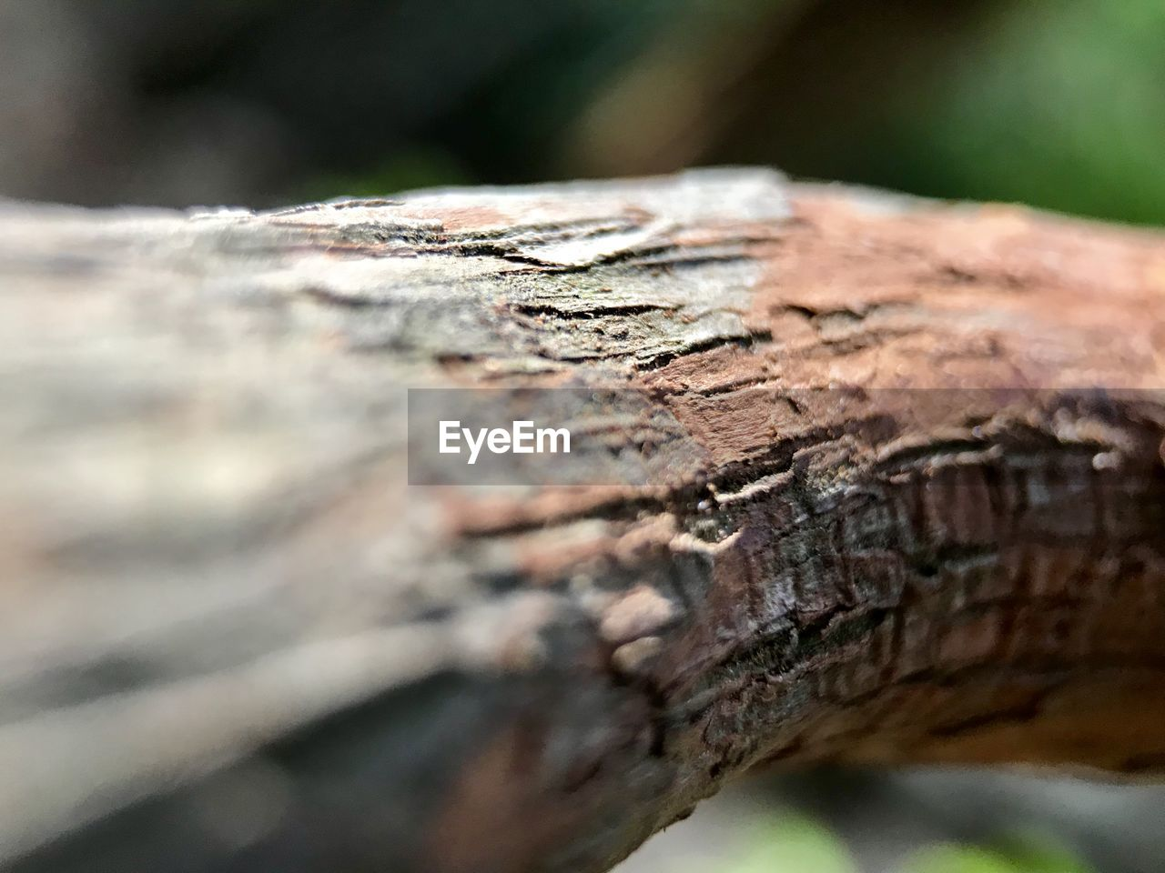 close-up, textured, wood - material, selective focus, day, outdoors, no people, nature