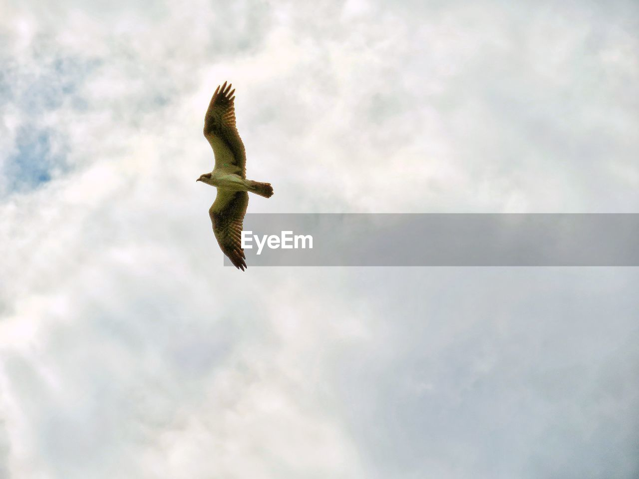 cloud - sky, sky, flying, low angle view, animal wildlife, animal themes, vertebrate, animal, bird, animals in the wild, one animal, mid-air, spread wings, no people, day, nature, outdoors, beauty in nature, motion, seagull, directly below