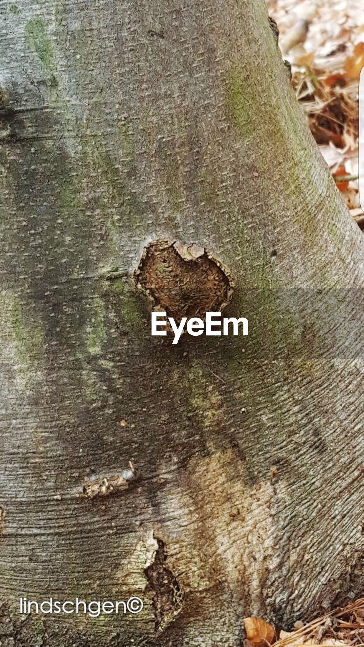 textured, tree trunk, close-up, day, no people, outdoors, wood - material, nature, leaf, bark, tree
