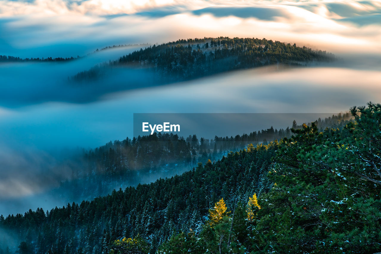 Scenic view of forest against cloudy sky