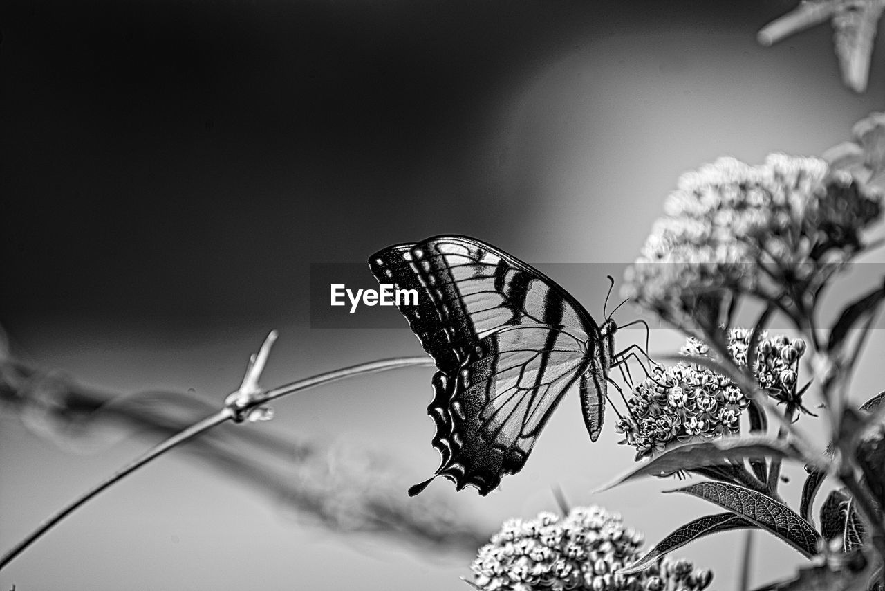 insect, flower, beauty in nature, invertebrate, flowering plant, plant, animal wing, fragility, animals in the wild, butterfly - insect, animal themes, animal wildlife, vulnerability, animal, one animal, nature, close-up, focus on foreground, no people, growth, flower head, outdoors, butterfly, pollination