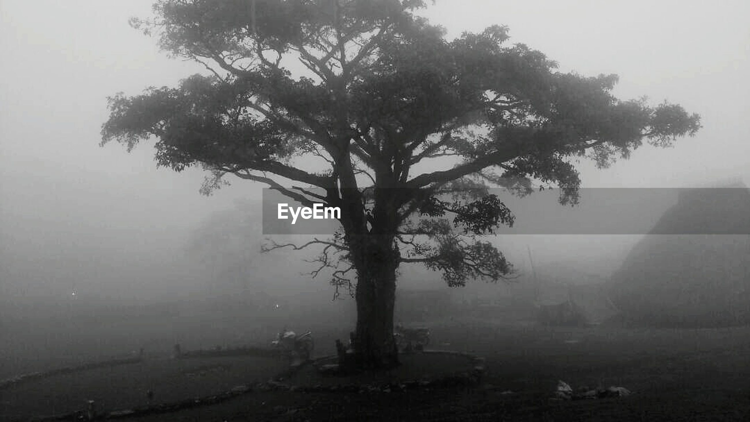 tree, fog, mist, landscape, branch, foggy, nature, weather, tranquility, tree trunk, tranquil scene, hazy, beauty in nature, scenics, no people, day, outdoors